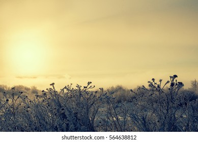 Winter backgrounds, Wallpaper. Silhouettes of grass in the snow on a background of sunrise