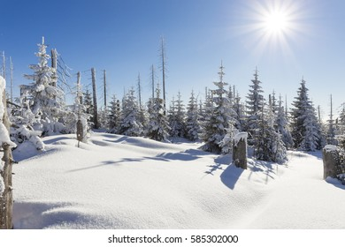 winter in the bavarian forest, Germany