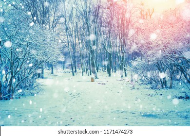 Winter beautiful nature landscape in park at sunset