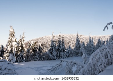 winter bellow Lysa hora hill in Moravskoslezske Beskydy mountains in Czech republic with snow covered hiking trail, frozen trees, hill on the background and clear sky
