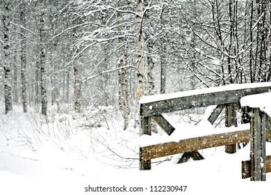 Winter birch tree forest landscape in heavy snowfall with a wooden bridge