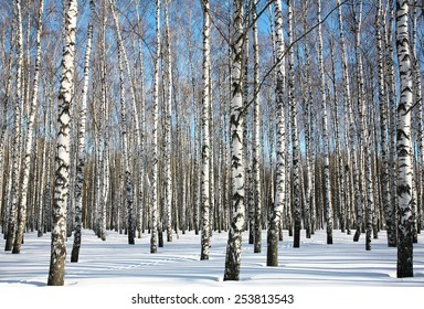 Winter birches on blue sky