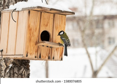 winter-birds-fly-feeder-search-260nw-158