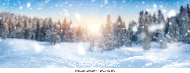 Winter blur landscape background and snow, frost wide panorama with free space for your text or decoration. Snowy trees banner in winter sunny time.