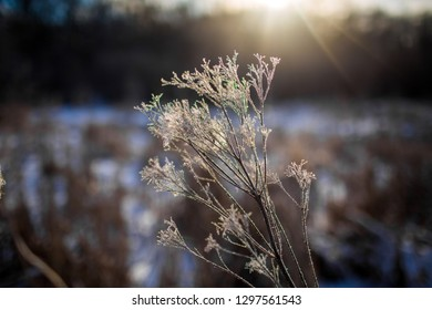 Winter branch. Winter cold