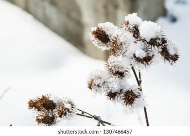 winter at brasov  - Shutterstock ID 1307466457