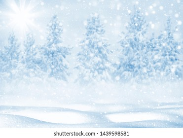 Winter bright background. Christmas landscape with snowdrifts and pine forest in the frost.