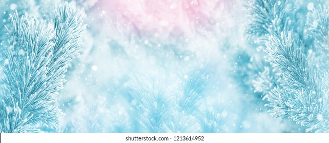 Winter bright background with  pine branch in  frost