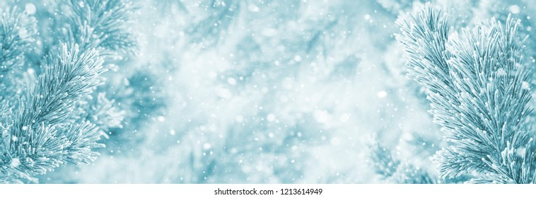 Winter bright background with snowy pine branches