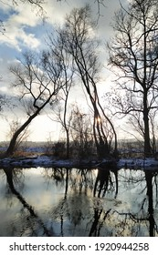 Winter by the river in Litovelske Pomoravi, which is a protected landscape area in the Czech Republic