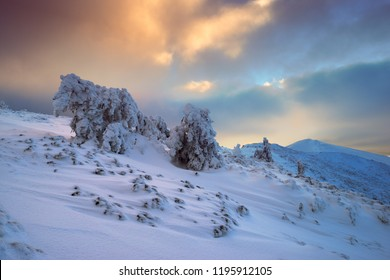 Winter in Carpathian Moumtains