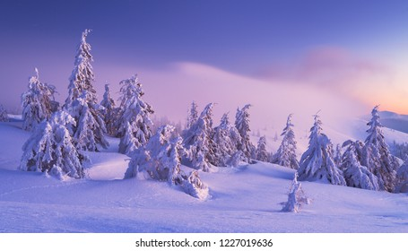 Winter in Carpathian Mountains. National park Synevyr, Ukraine