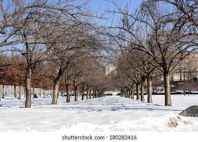 Winter Cherry Trees in Brooklyn, New York City