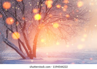 Winter Christmas background. Shining lights in frosty scene. Colorful snowflakes glowing on sunlight at sunset. Snowy winter. New Year time