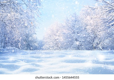 Winter Christmas idyllic landscape. White trees in forest covered with snow, snowdrifts and snowfall against blue sky in sunny day on nature outdoors,  blue tones. - Shutterstock ID 1455644555