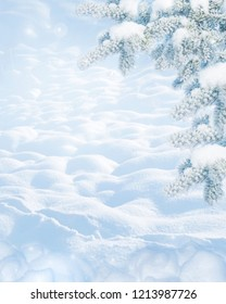 Winter Christmas scenic landscape on frosty sunny day with border of fir branches with white snow close-up and snowdrifts. Snowy backdrop in forest on nature outdoors, with copy-space, toned in blue