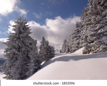 Winter in Ciucas Mountains: snow, tree, sky