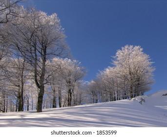 Winter in Ciucas Mountains: snow, tree, sky
