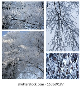 Winter Collage of Snowy White Tree Branches