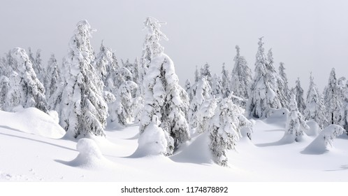 Winter coniferous forest on a mountain slope in a light fog.