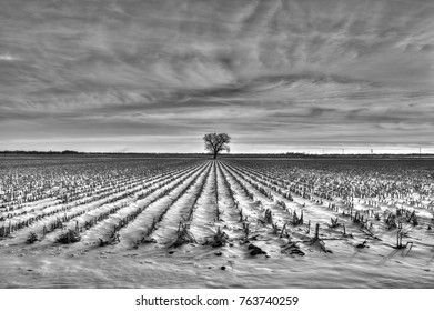Winter cornfield with snow