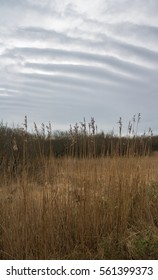 Winter day clouds above a reed bed in the UK
