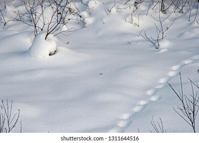 The winter day -  steps of  animals on snow