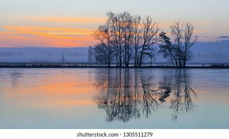 Winter daybreak scene, frozen wetland and row of beautiful shaped trees reflected in water, Turnhoutse Vennen, Flanders, Belgium.