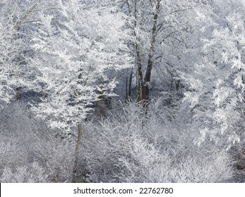 Winter deciduous trees covered with industrial snow