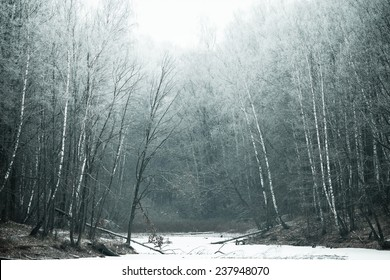 Winter deep forest covered with hoarfrost and snow.