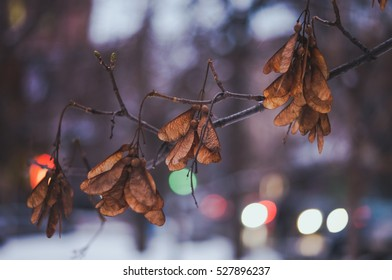 Winter dried leaves background