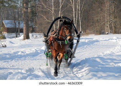 Winter driving on horses