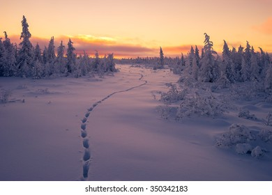 Winter Evening Landscape with step of wolf