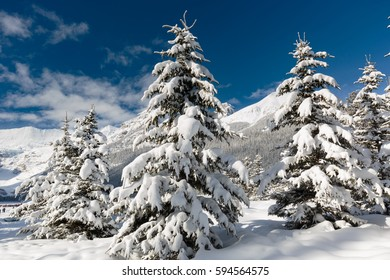 Winter fairyland in the Canadian Rockies