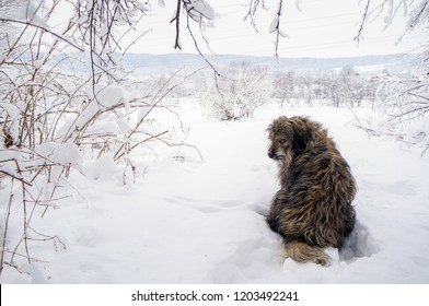 Winter fairytale scene with a dog sitting in snow and looking back at the owner. Tousled dog in snow. Winter frozen landscape.