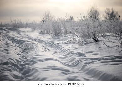 Winter in the field