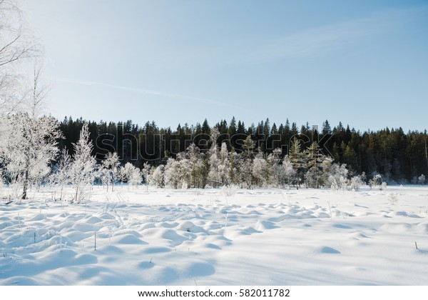 Winter field landscape with the frosty trees lit by soft sunset light - snowy landscape scene in warm tones with snow covered field and trees covered with frost