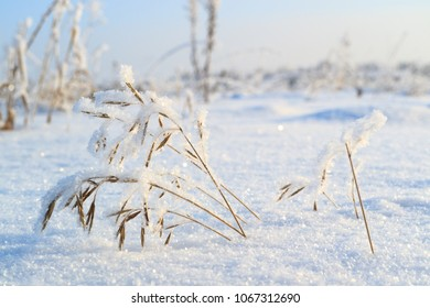 winter field on which grass grows, snow and frost blade
