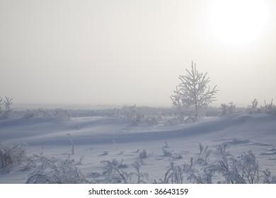 Winter. A field. A small birch. Frosty morning.