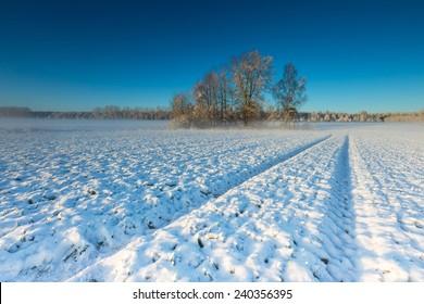 winter field at sunrise