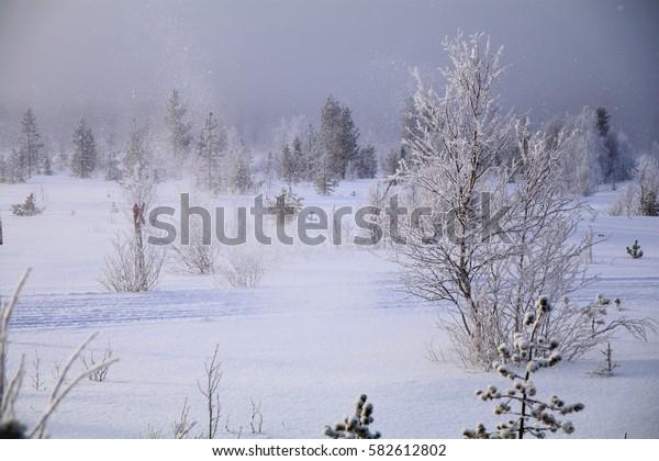 Winter in Finish Lapland. Winter landscape in the Pyhä-Luosto National Park near Luosto village.