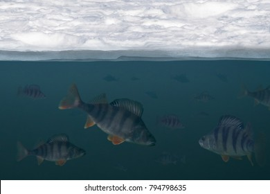 Winter fishing background. Troop of perch fish in water, under ice view.