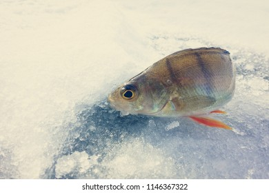 winter fishing from ice