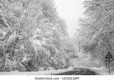 Winter Florest Street view on the way to Poiana Brasov in Romania
