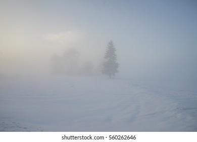 Winter foggy day