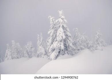 Winter foggy day in Karpaty mountains, Ukraine.