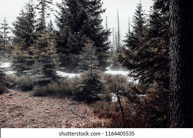 The Winter in the forest