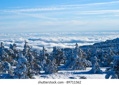 winter forest above a dense clouds