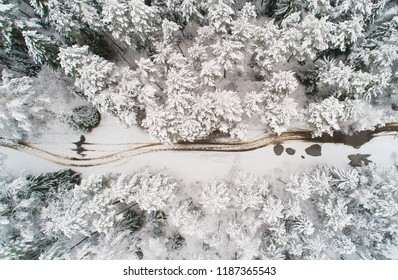 Winter forest. Winter aerial landscape. Trees covered by snow view from above. Winter background.