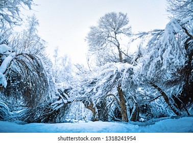 Winter forest after snowfall.